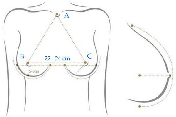 Cách tính độ săn chắc của vú và độ cong của bầu ngực lý tưởng
